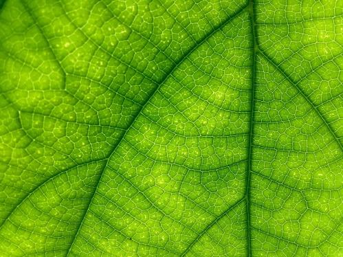 leaf-1161141_960_720